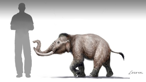 Mini mammoth once roamed Crete | Amazing Science | Scoop.it