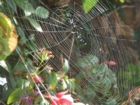 Cobwebs, worldwebs and challenging established ideas | Ross ... | Google Sites for Teaching and Learning | Scoop.it