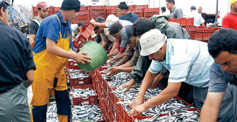 Price of Fish Skyrockets in Morocco During Ramadan   Marrakech and Sanssouci Collection   Scoop.it