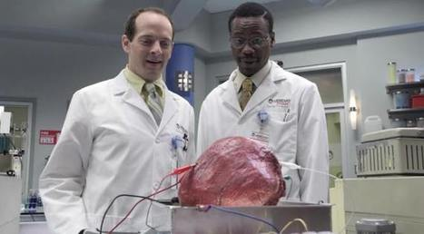 Breakthrough: Synthetic Meat Made From Stem Cells | leapmind | Scoop.it