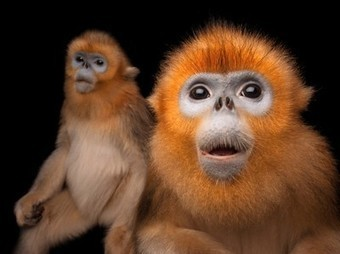 Monkey Picture -- Animal Photo -- National Geographic Photo of the Day | camera | Scoop.it