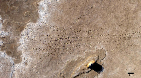 Huge set of fossil tracks preserves march of the ancient elephants | Aerial Mapping Weekly Update | Scoop.it