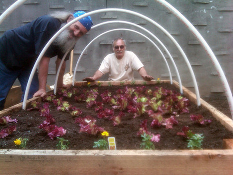 Awesome Project: Hoophouse of Hope | ioby | Vertical Farm - Food Factory | Scoop.it
