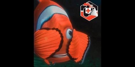 Pêche en eaux profondes : appels au boycott contre Intermarché   Intelligence collective   Scoop.it