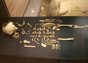 Neandertal raclait les os pour manger à sa faim - Hominidés | Aux origines | Scoop.it