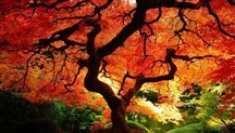 Beautiful fall foliage around the world | Belize Travel and Vacation | Scoop.it