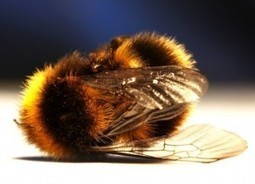 Pesticides Definitively Linked to Bee Colony Collapse | The Alliance for Natural Health USA | Organic Farming | Scoop.it