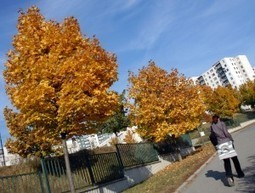 How Can Cities Finance The Care of Urban Forests? | Tree Preservation Planning | Scoop.it