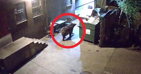 Watch Till End: Bear Steals An Entire Dumpster... | I'm bored | Scoop.it