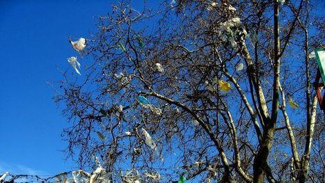 Bruxelles part en guerre contre les sacs en plastique jetables   éco-matériaux   Scoop.it
