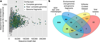 Ecogenomics and potential biogeochemical impacts of globally abundant ocean viruses | MycorWeb Plant-Microbe Interactions | Scoop.it