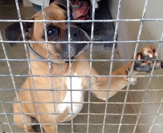 France Bleu | L'été, un temps de chien pour les animaux de compagnie