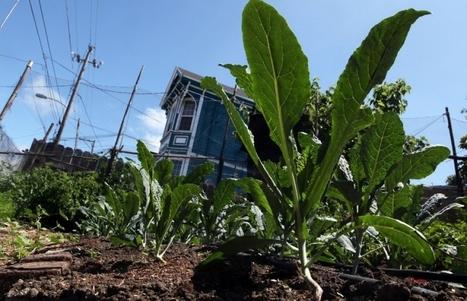 L'agriculture urbaine : un phénomène mondial | Alternativas - Tecnologías - Reflexion - Opiniones - Economia | Scoop.it