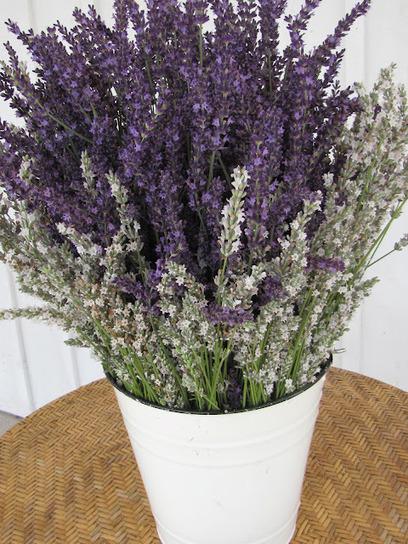 Finger Lakes Lavender Festival: One more week until the Finger Lakes Lavender Festival! | Annie Haven | Haven Brand | Scoop.it