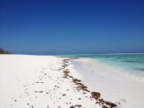 Les trésors des îles Éparses | La passion de la mer : protection des espèces, littérature, blue society | Scoop.it
