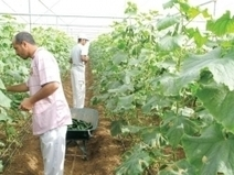 MIDDLE EAST - OMAN: Proper use of pesticides in farms advised | YOUR FOOD, YOUR ENVIRONMENT, YOUR HEALTH: #Biotech #GMOs #Pesticides #Chemicals #FactoryFarms #CAFOs #BigFood | Scoop.it