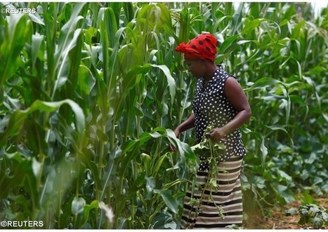 Climate change: Zambia encourages conservation farming - Vatican Radio | FANRPAN | Scoop.it