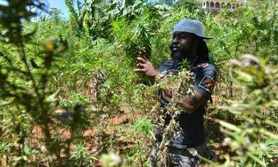 Jamaica's ganja tours draw the tourists   Alcohol & other drug issues in the media   Scoop.it