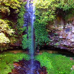 Staceyandneil's Travel Blog: Dorrigo National Park, Australia - November  7, 2014 | Dorrigo | Scoop.it