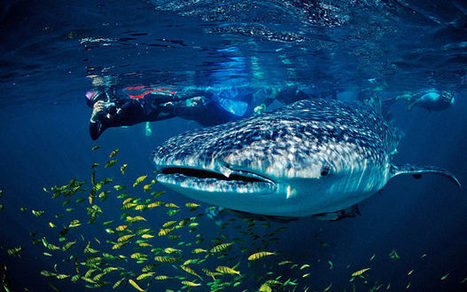 Sea of Cortez: the world's aquarium - Daily Telegraph | Baja California | Scoop.it