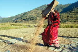 Going to seed - Nepali Times | Food issues | Scoop.it