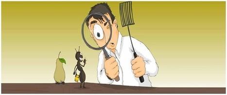 رش ومكافحة حشرات بالرياض 0557766881  |ضفاف الخليج | defafalkhaleej | Scoop.it