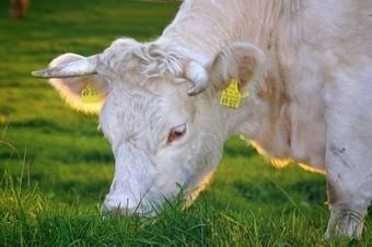 Smettere di mangiare carne : 5 validi motivi   Alimentazione Naturale, EcoRicette Veg e Vegan   Scoop.it