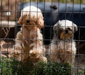 Bunny's Blog: PetSmart Charities Assists Hundreds of Rescued Dogs in South Carolina | Pet News | Scoop.it