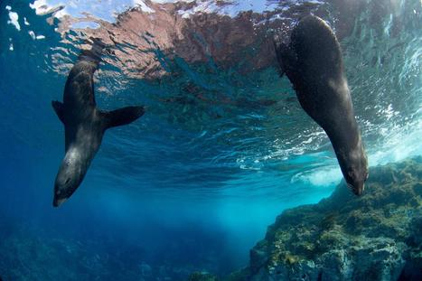 Chile Creates Largest Marine Reserve in the Americas | Coastal Restoration | Scoop.it