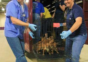 Animal hoarding: 187 dogs seized from Pennsylvania home now in shelters; but no health issues with animals | Pet News | Scoop.it