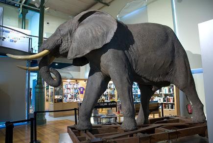 Museo Nacional de Ciencias Naturales, MNCN - CSIC - Google Arts&Culture   Ciencia al alcance de todos   Scoop.it