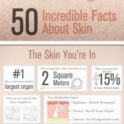 50 Incredible Facts About Skin   Visual.ly Eigenlijk zouden we deze techniek van infografics mooi in de klas kunnen inzetten! In plaats van een werkstuk laat je kinderen infografics maken!   Visualisatie-tools leernetwerken   Scoop.it
