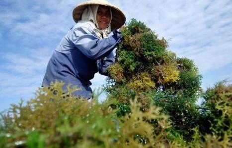 La Bretagne veut nous faire manger des algues | Des 4 coins du monde | Scoop.it