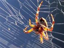Spiders actually look bigger to arachnophobes | Kickin' Kickers | Scoop.it