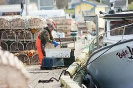 Lobster fishermen may tie up their boats - NG News | Nova Scotia Fishing | Scoop.it