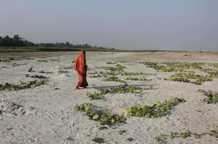 Is agricultural system adapting to climate change in South Asia?   CGIAR Climate   The Big Picture   Scoop.it