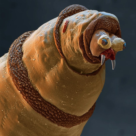 Photos of the Amazing and Gruesome World Under a Microscope | Inspired By Design | Scoop.it
