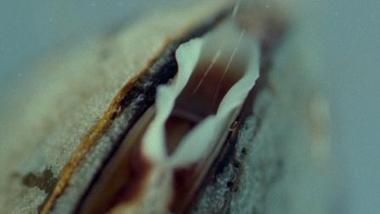 Mussels In Love | VOD, Indie & DIY Distribution Daily News | Scoop.it