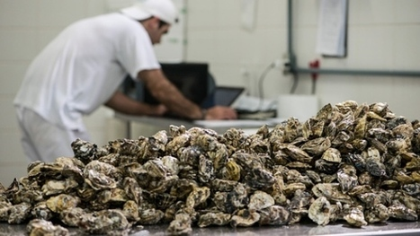 Rise of acidic oceans spikes price of B.C. shellfish | Changing Chemistry - The People Impacted by Ocean Acidification | Scoop.it
