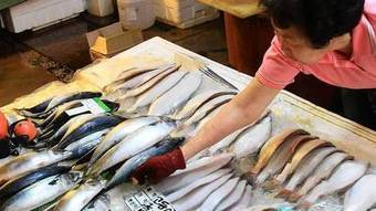 Fukushima fishermen watch recovery slip away | Sustain Our Earth | Scoop.it