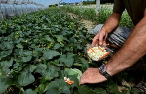 Agriculture: dans la Drôme, un bio-district unique en France | Model & Inspiration | Scoop.it
