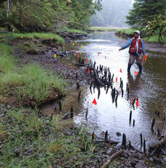 Parks Canada - Archaeology - Between Land and Sea: 13,000 Years of Archaeological Evidence for Habitation in Haida Gwaii | First Nations Education | Scoop.it