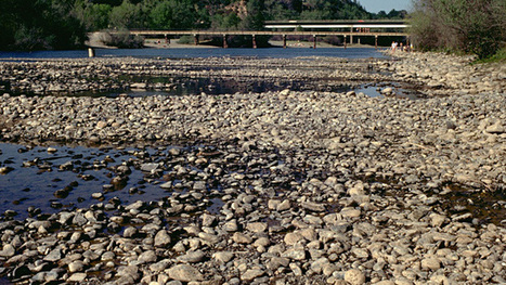 California Drought Loosens Some Environmental Rules - KQED (blog) | APES | Scoop.it