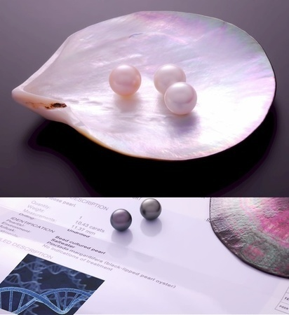 DNA-based Pearls identification? | Pearls & Fashion | Scoop.it