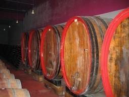 Ricerca Wine Monitor: natura e cantine, vacanza ideale - Con i piedi per terra   www.vacanzaidea.eu   Scoop.it