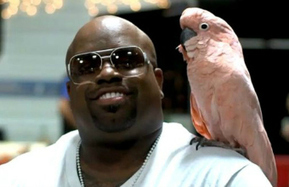 Animal Rights Group Demands Cee Lo Green Put Away His Cockatoo - Mediaite | Animals R Us | Scoop.it
