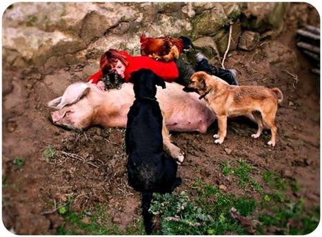 Italy's Vegan Commune Where Animals And Humans Are Equals | Human-Wildlife Conflict: Who Has the Right of Way? | Scoop.it