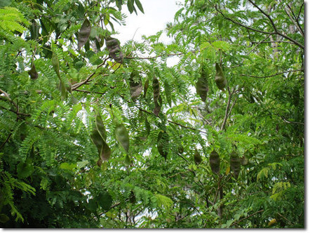 Ecosystem Mimicry in Subtropical Florida Permaculture Forums, Permaculture Courses, Permaculture Information & News | Sustainable Futures | Scoop.it