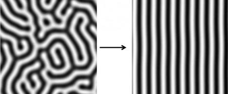 A mathematical model for animal stripes | Amazing Science | Scoop.it