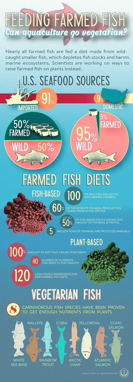 Carnivorous fish going vegetarian ? by @FAOfish   study   Scoop.it